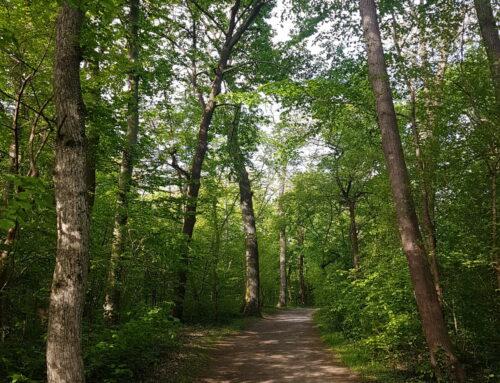 Ein Waldspaziergang stärkt Ihr Immunsystem